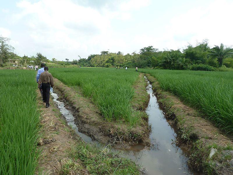 เกษตรพันธสัญญากับการจัดการโซ่อุปทานสินค้าเกษตร