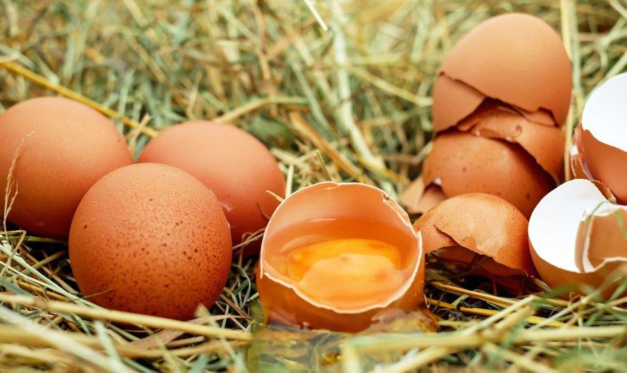 บริโภคไข่ Eating Eggs
